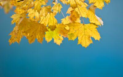 Tips voor een gezonde herfst