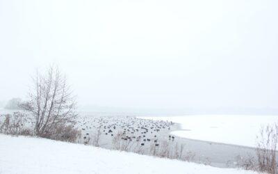 Over winteren